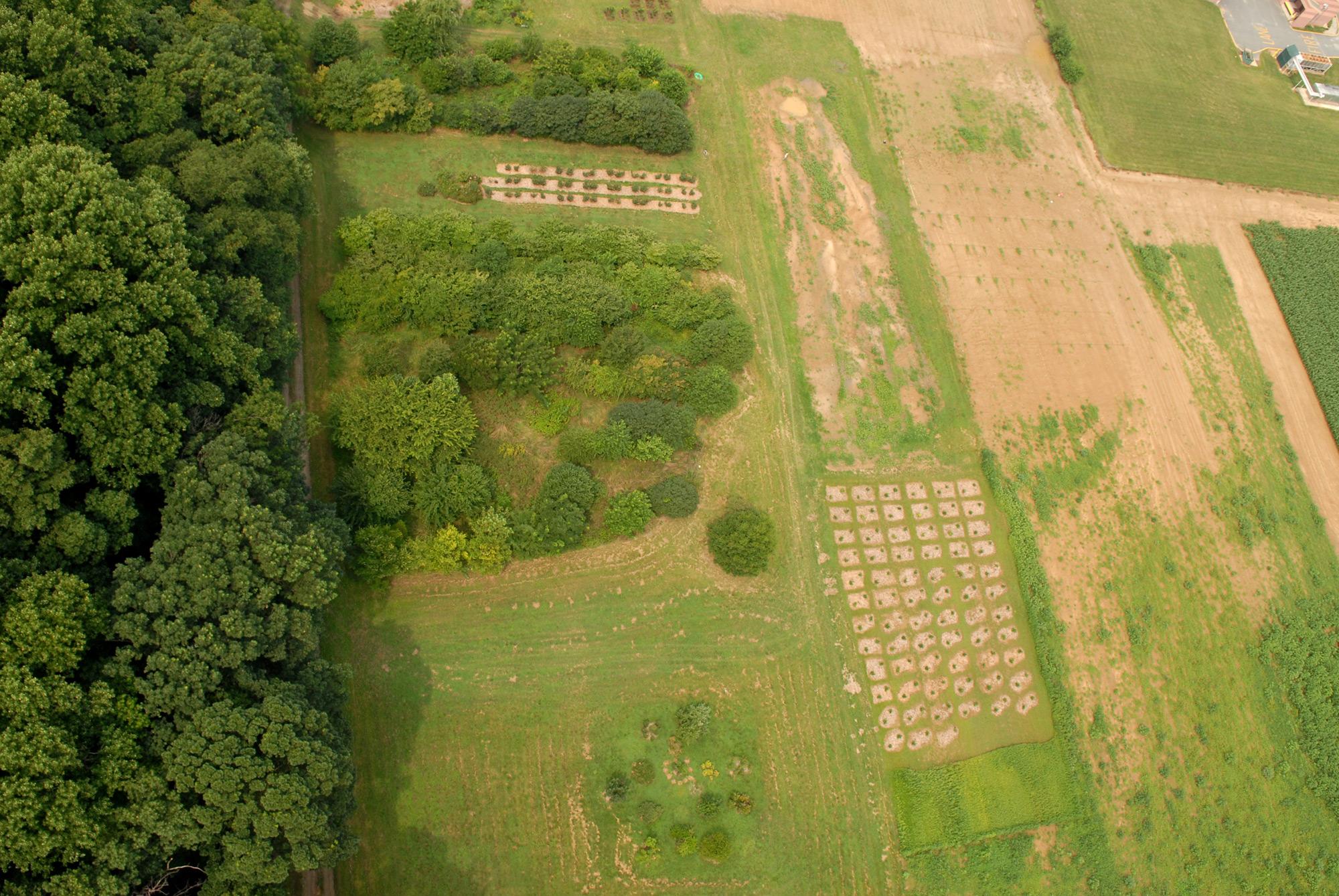 Ecology Woods