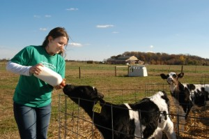 student-feeding-calf