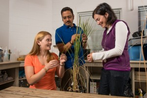 UD research may lead to new control for devastating rice disease