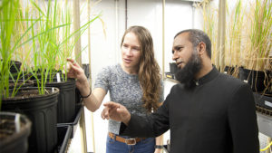 UD researcher, Fulbright Scholar join forces to defend and fortify rice