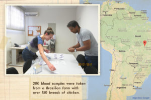 UD researchers travel to Brazil to study heat stress in poultry