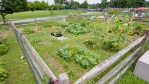 Delaware Cooperative Extension works to bring healthy food to urban areas