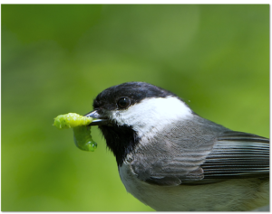 UD's Desiree Narango looks at how residential yards impact food webs